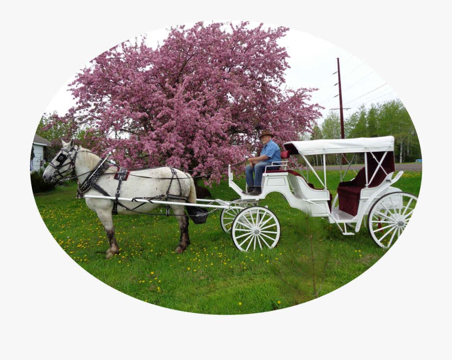 Carts Clipart Carriage Ride.