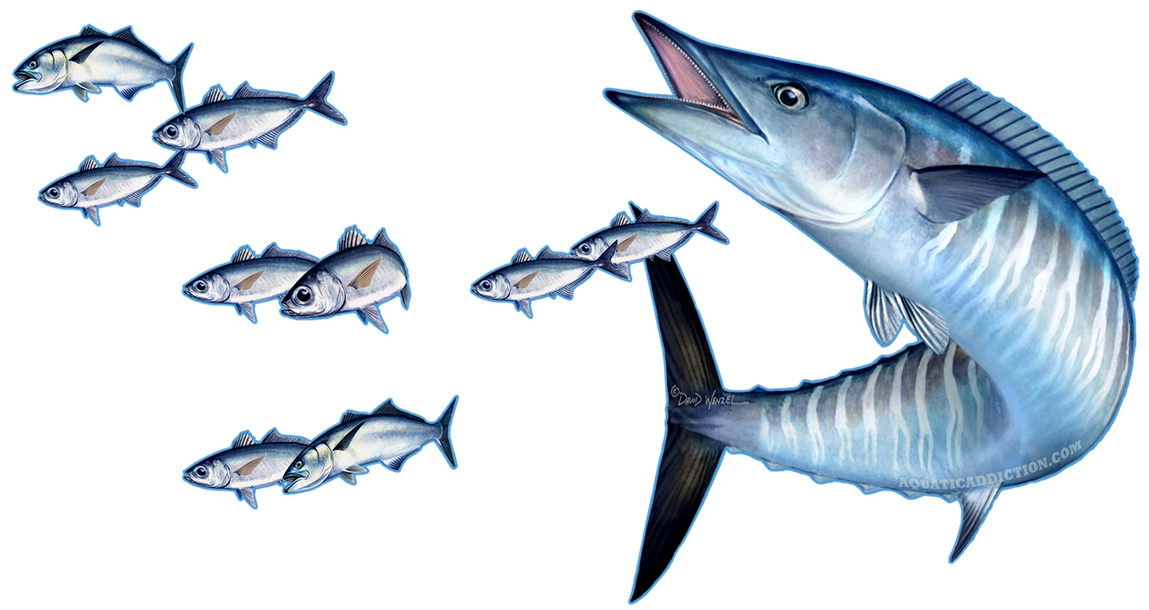 Free Wahoo Cliparts, Download Free Clip Art, Free Clip Art on.