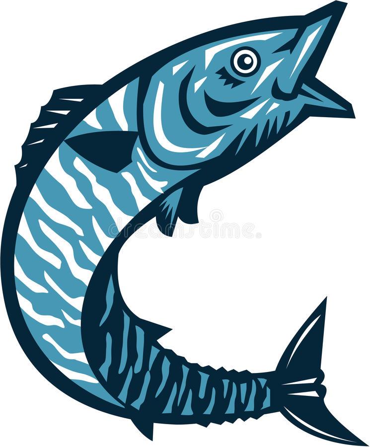 Wahoo Fish Stock Illustrations.