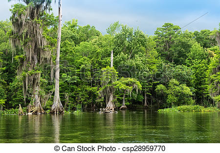 Picture of Wakulla Springs State Park and River.