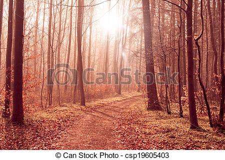 Stock Fotografie von dunstig, Wälder, wald, Pfad.