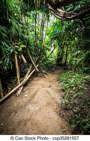 Stock Bilder von gartenerde, baum, wald, Pfad, bambus.