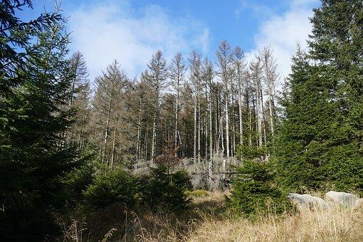 Waldsterben.