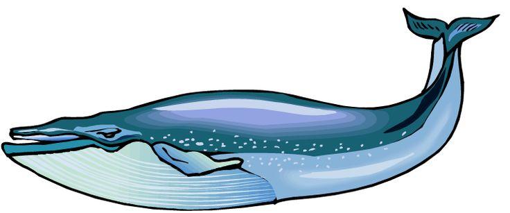 Whale Clipart & Whale Clip Art Images.
