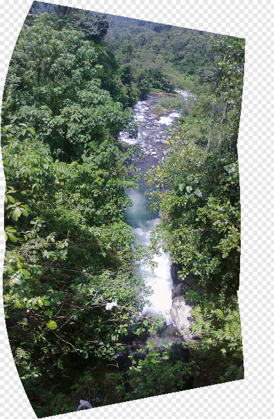 Walindi cutout PNG & clipart images.