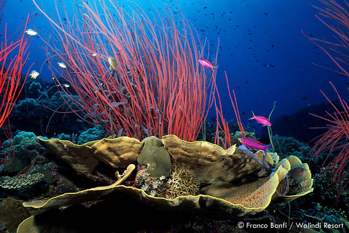 2019 Papua New Guinea Underwater Photo Workshop.