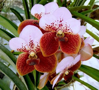 Pin on Orchids.