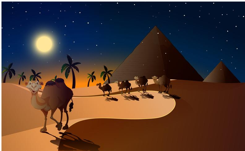 Camels walking in the desert at night.
