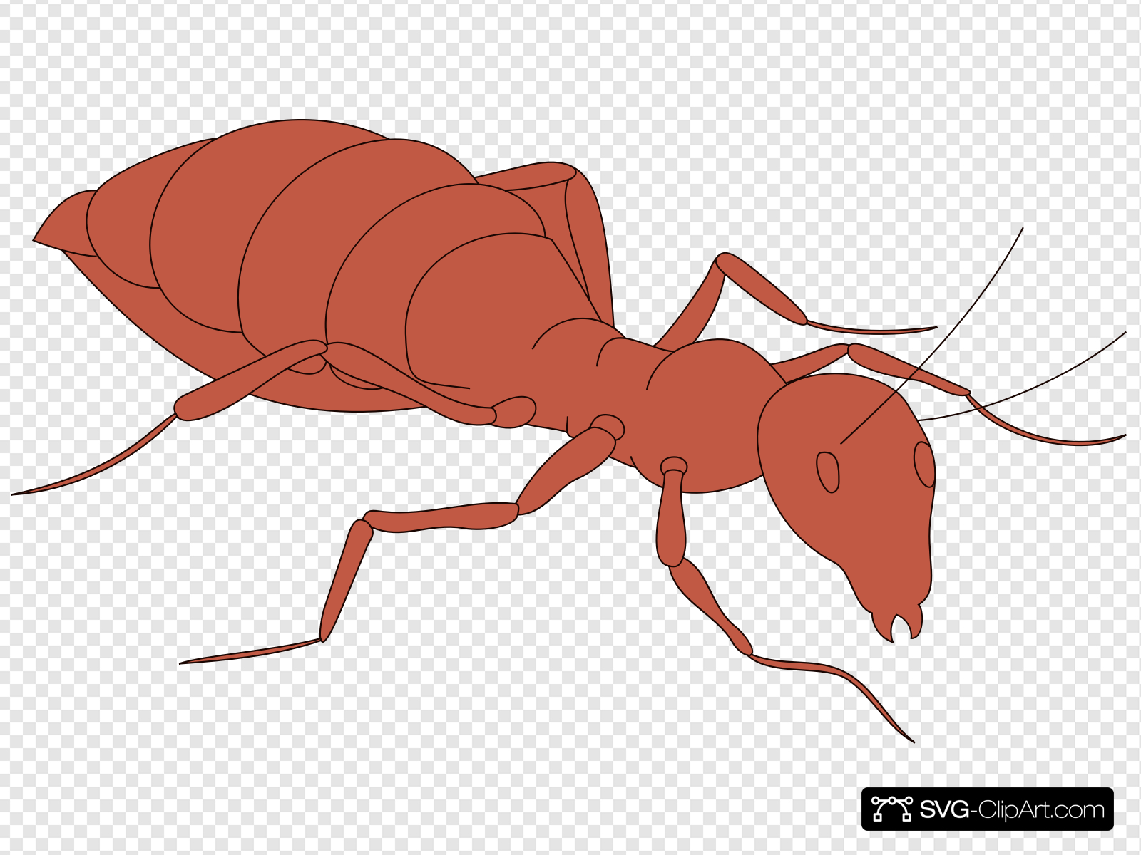 Walking Orange Ant Clip art, Icon and SVG.