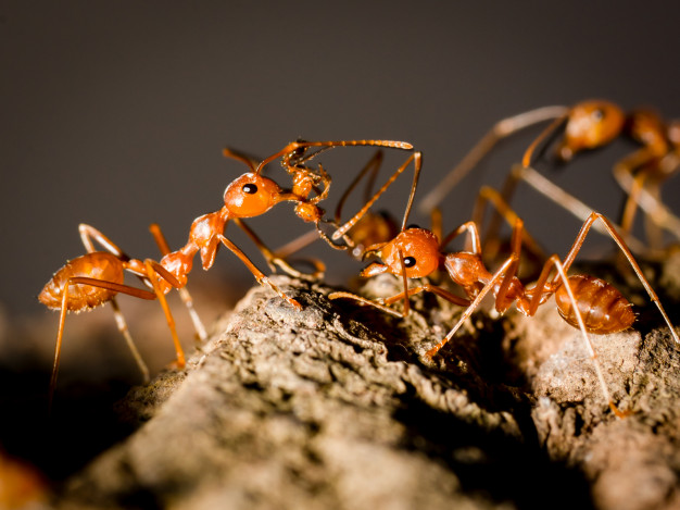 Ants Carrying Vectors, Photos and PSD files.