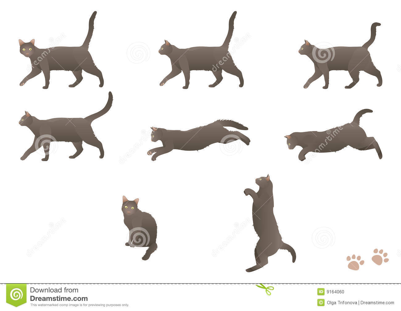 Walking Cat Stock Photo.