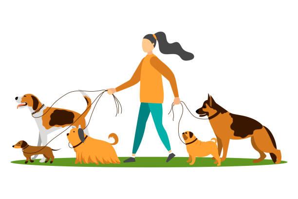 Best Dog Walking Illustrations, Royalty.