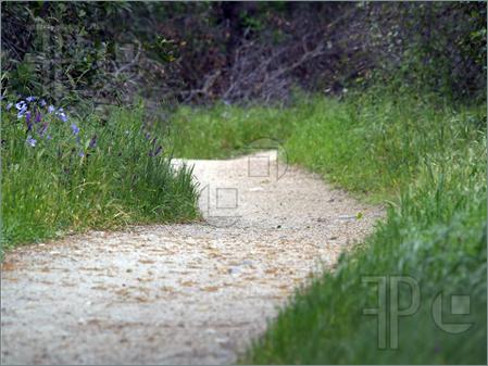 Walking path clipart #19