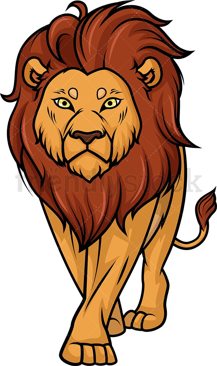 Lion Walking.