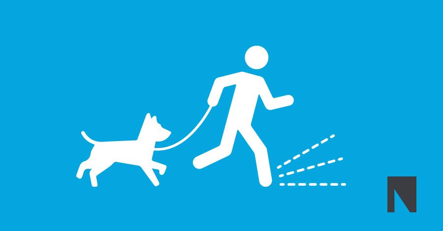 How To Keep Your Dog Safe Walking At Night.