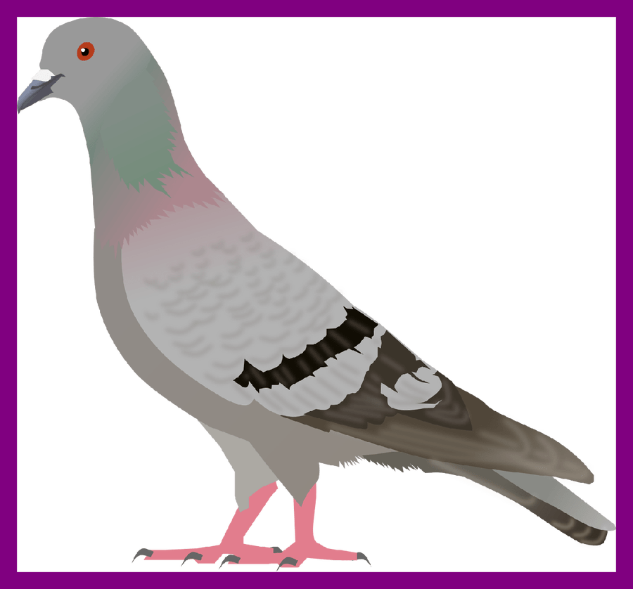419 Pigeon free clipart.