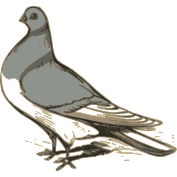 Vector clip art of grey pigeon illustration.