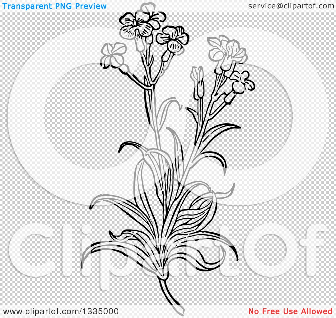 Clipart of a Black and White Woodcut Herbal Medicinal Wallflower.
