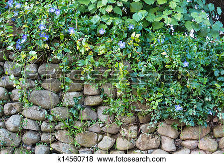 Pictures of Stone Wall Plants k14560718.