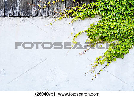 Clipart of climbing plants on the wall k26040751.
