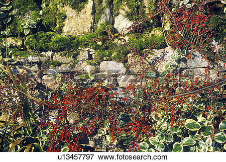 Picture of Plants Growing Over a Stone Wall u13457797.