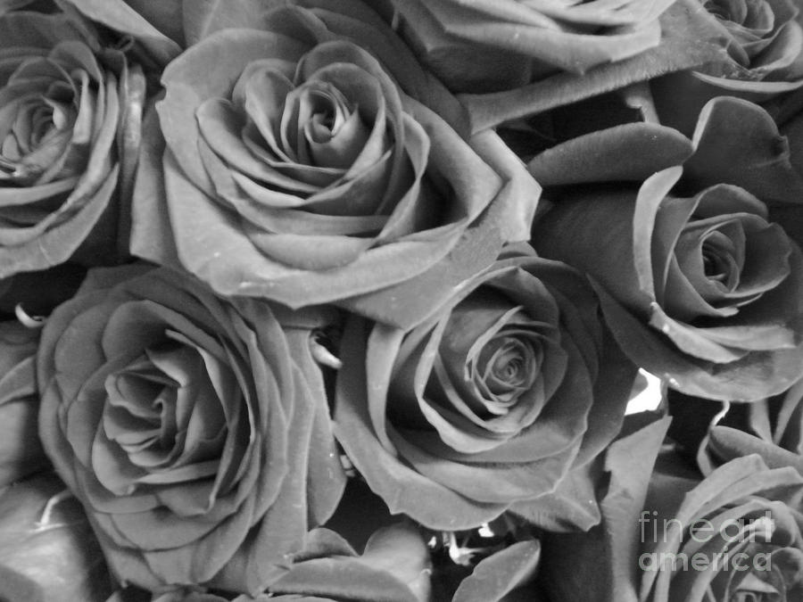 Roses On Your Wall Black And White by Joseph Baril.