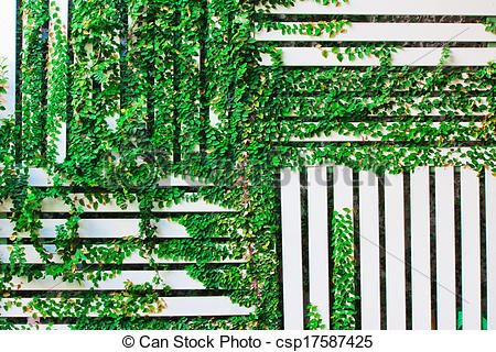 Stock Photo of The Green Creeper Plant on a White Wall background.
