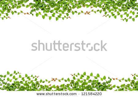 Brick Ivy Leaves Wall Stock Photos, Royalty.