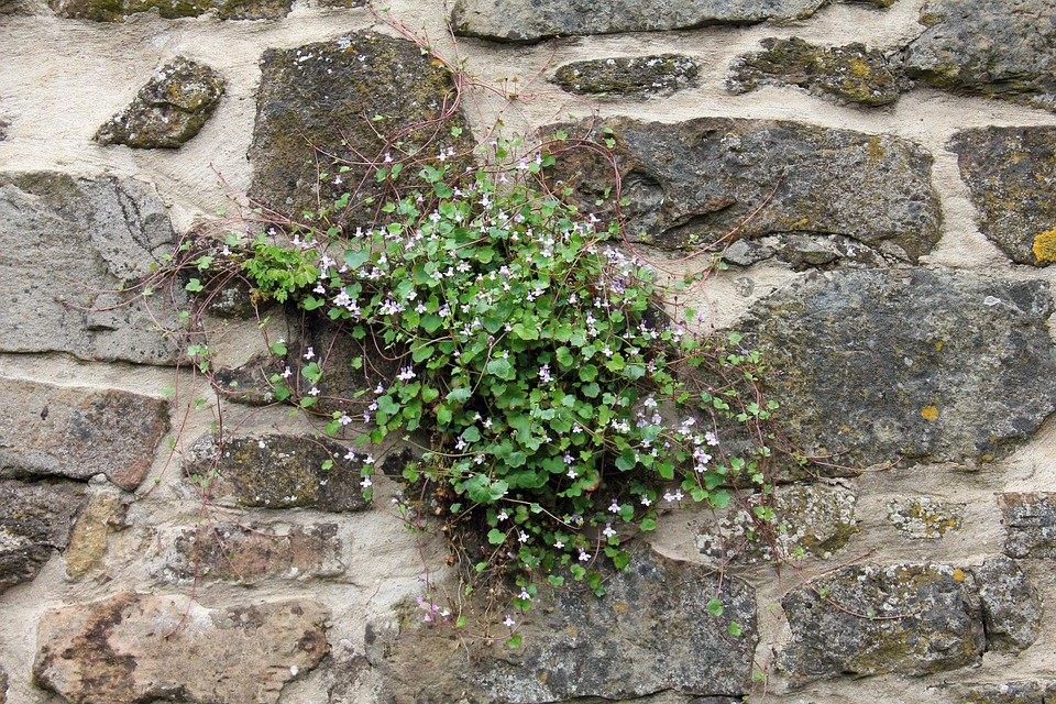Free photo: Plant, Wall, Blossom, Bloom.