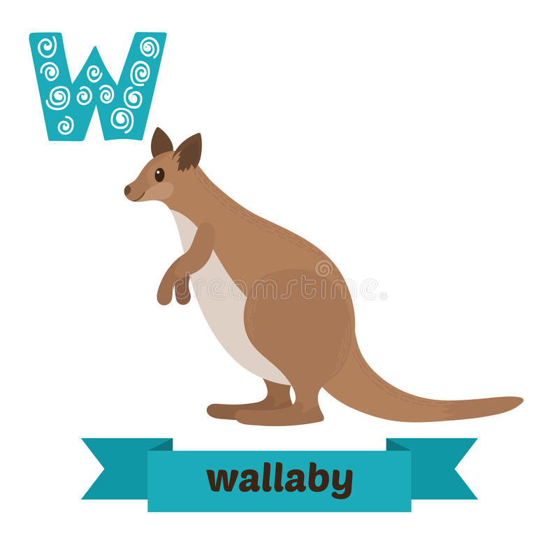 Wallaby Stock Illustrations.