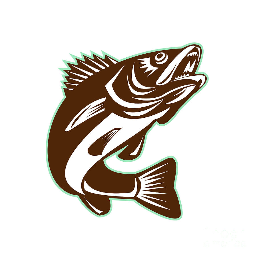 Walleye Fish Clipart.