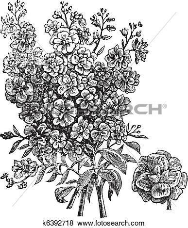 Clip Art of Double wallflower vintage engraving k6392718.