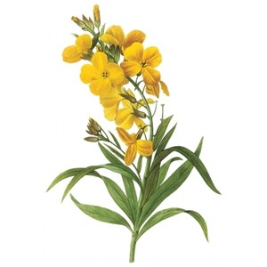 Wallflower Clipart 20 Free Cliparts Download Images On