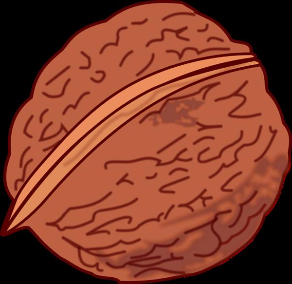 Walnut Clipart.