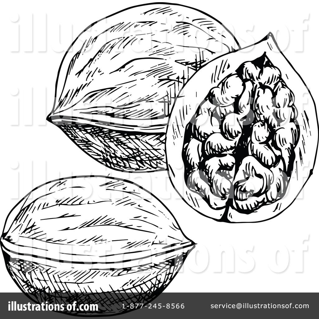Walnut Clipart #1457144.