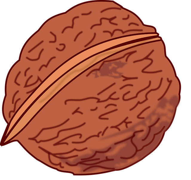 Free vector graphic: Essen, Foot, Fruit, Nut, Walnut.