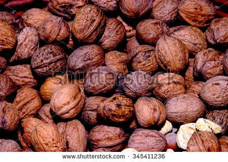 English Walnut Tree Stock Photos, Royalty.