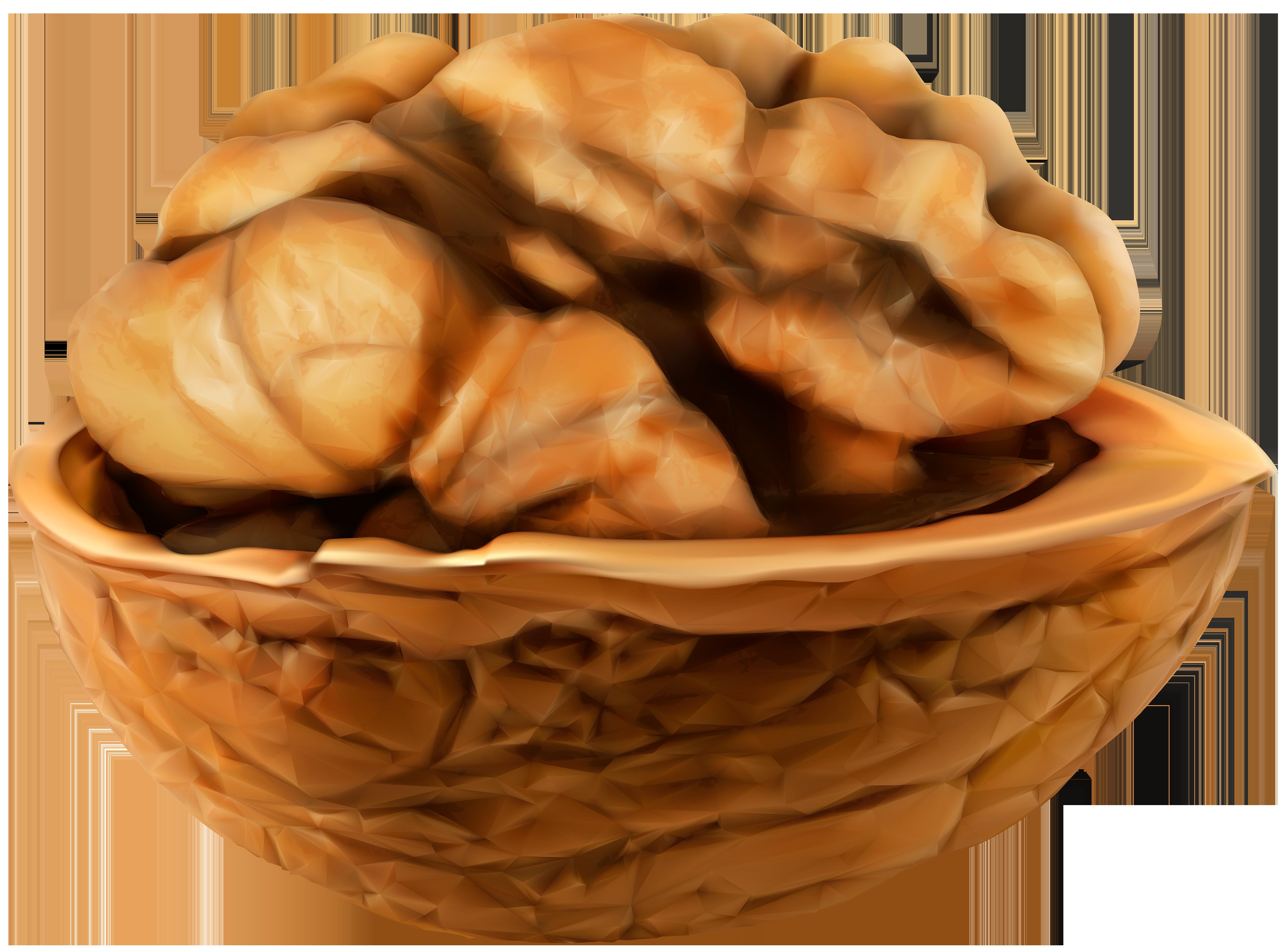 Open Walnut PNG Clip Art Image.