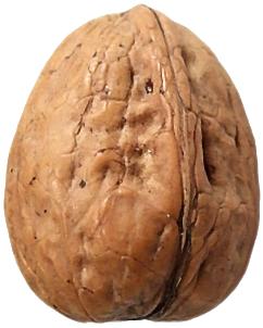 Walnut PNG Clipart.