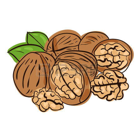 457 Walnuts Kernel Stock Illustrations, Cliparts And Royalty Free.