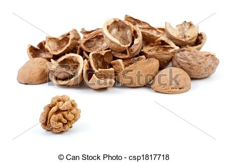 Pictures of Some nutshells and walnut kernel isolated on the white.