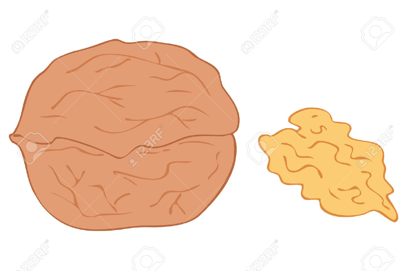 Walnut And Kernel. Royalty Free Cliparts, Vectors, And Stock.