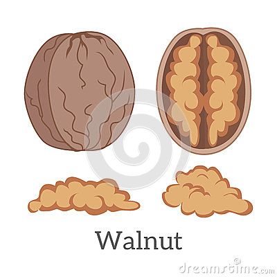 Illustration Of Walnut Kernels Stock Vector.