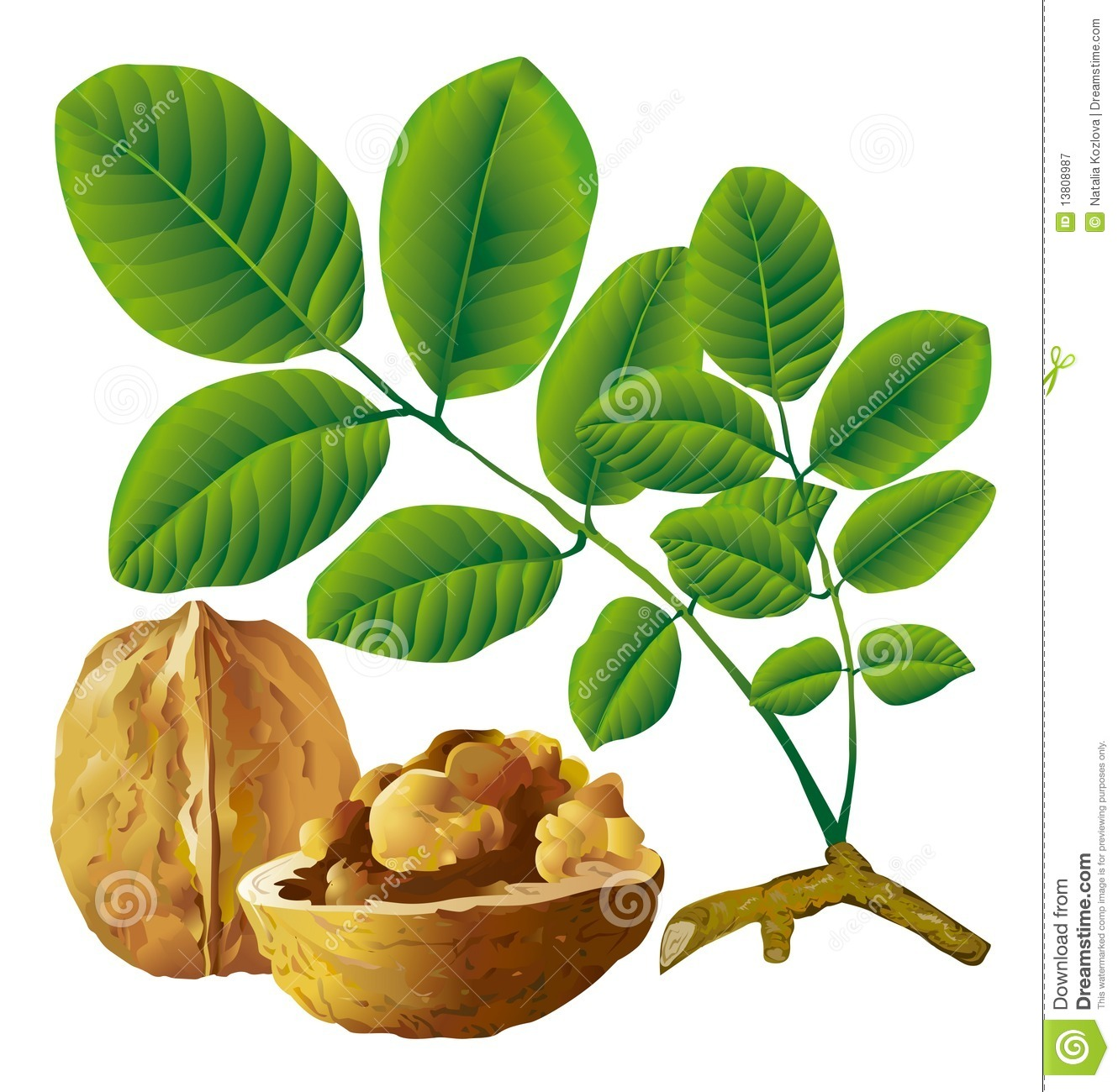 Walnut Nut With Leaf Royalty Free Stock Photography.
