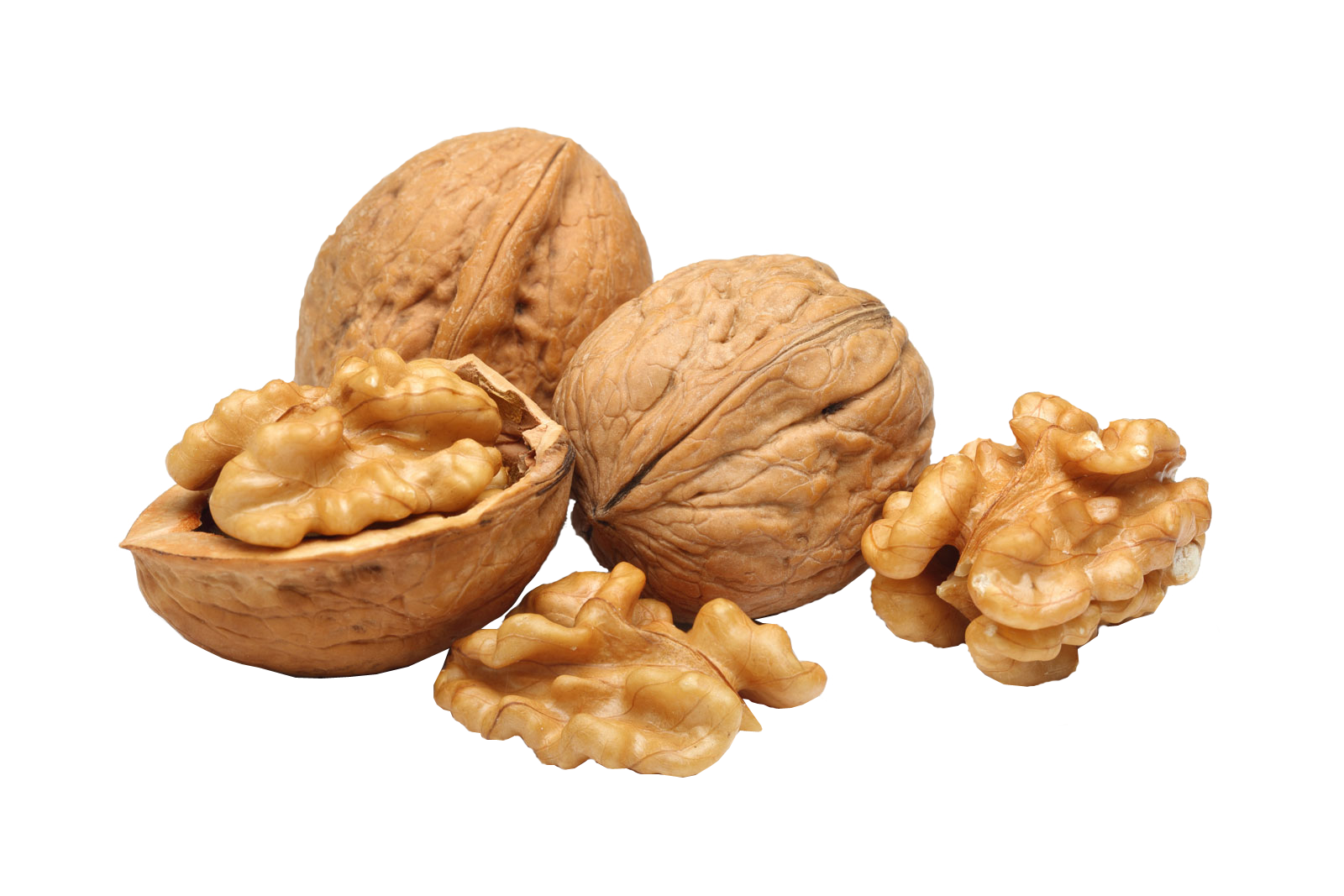 Walnut PNG images free download.