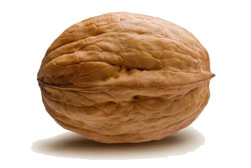 Download Walnut PNG.