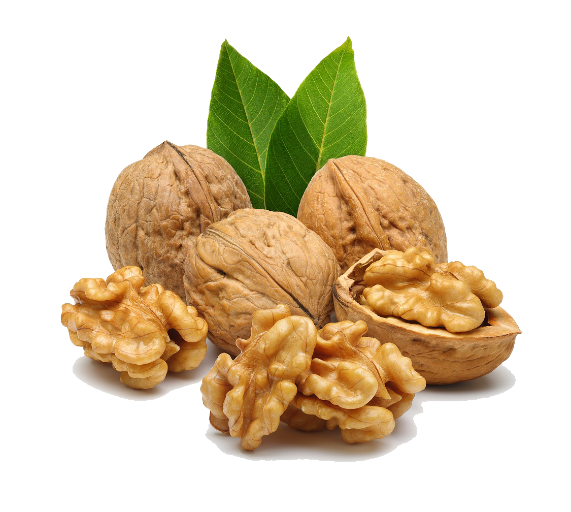 Walnut PNG Image.