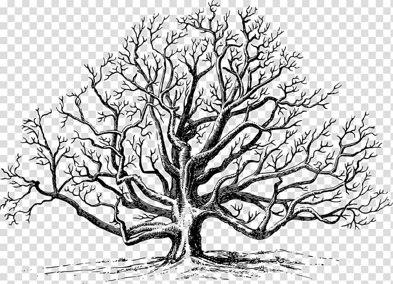 Eastern black walnut Tree English walnut , walnut.