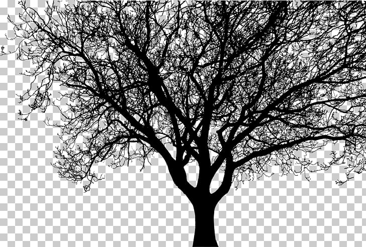 Silhouette Tree Branch , walnut PNG clipart.