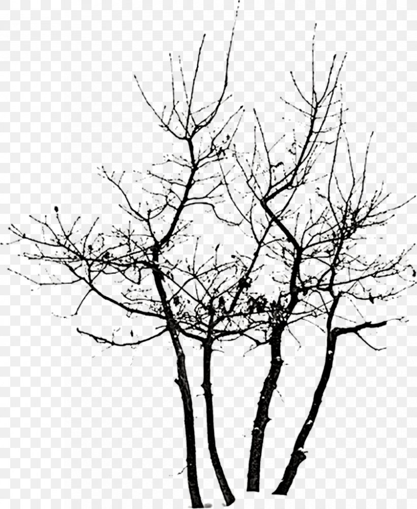 Tree Clip Art, PNG, 839x1024px, Tree, Black And White.